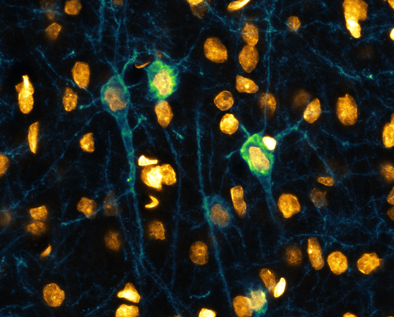 Neuron Cover image