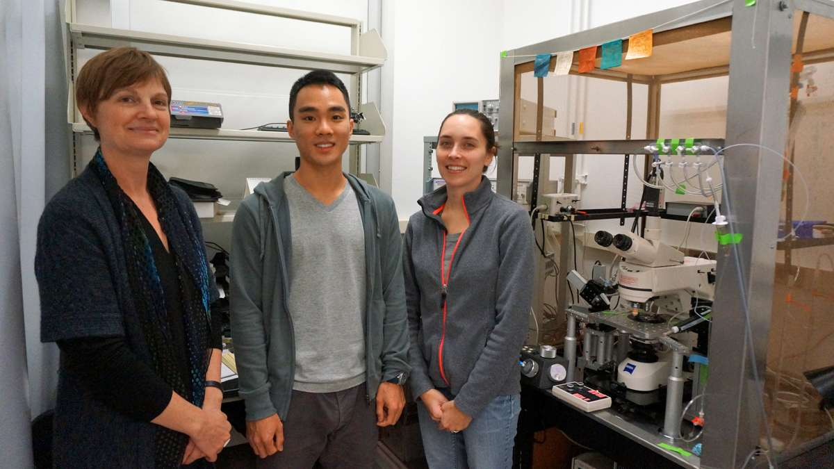 Professor Lisa Boulanger (left); undergraduate Joseph Park (center); and postdoc Carolyn Tyler (right) are studying what MHC proteins, which are classically considered part of the immune system, are doing in the brain. (Jessica McDonald/WHYY)
